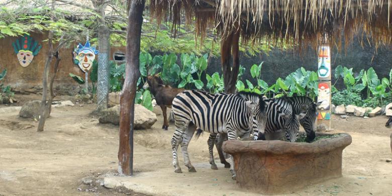 batu-secret-zoo2