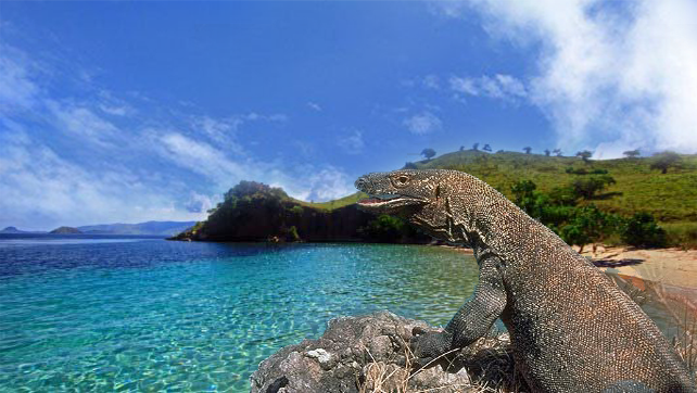 komodo-the-giant-lizard