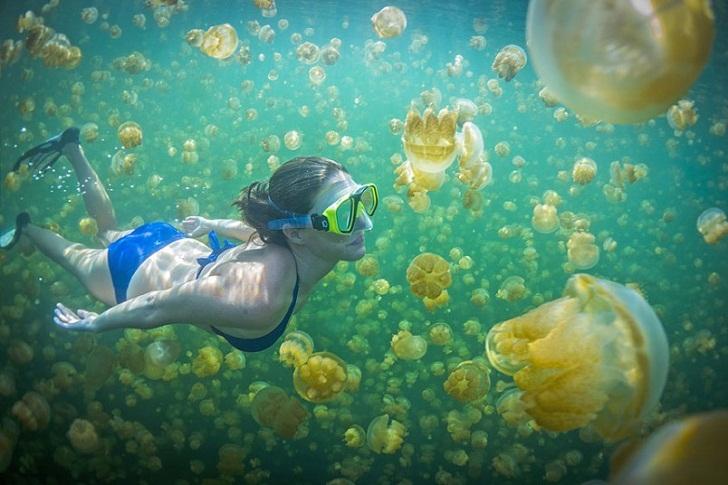 Menyelam bersama ubur-ubur
