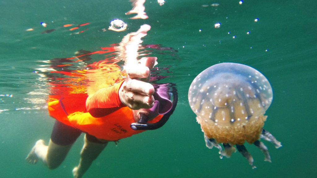 bermain dengan ubur-ubur di togean