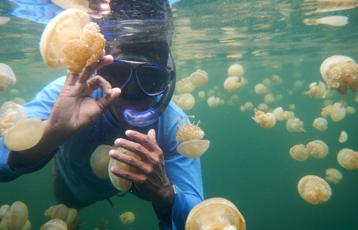 Berenang bersama ubur-ubur di danau lenmakana raja ampat