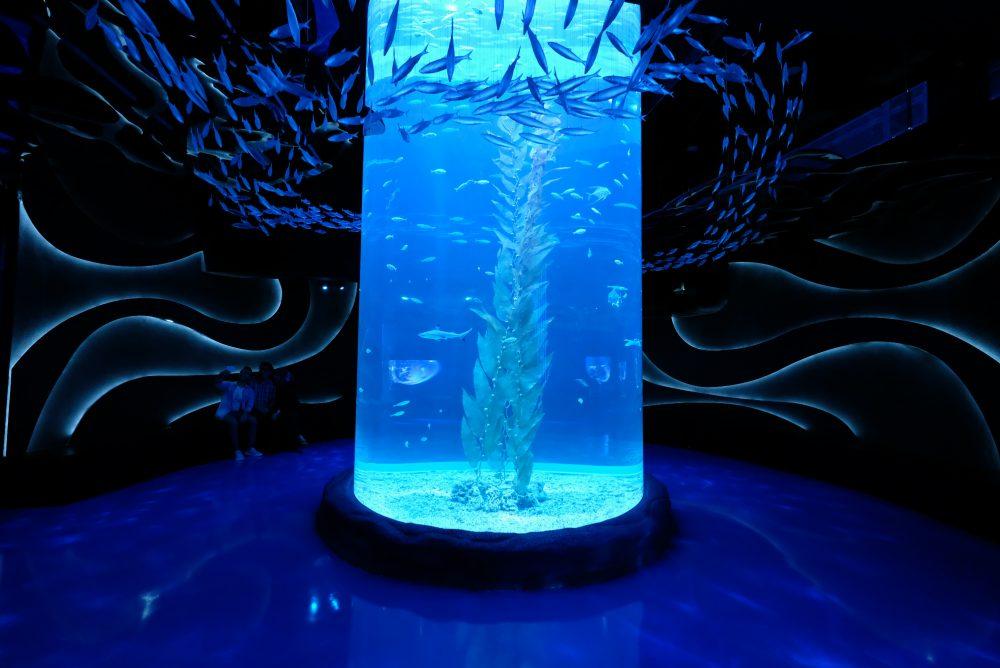 03 Jakarta Aquarium @jakartaaquarium - Negara Yang Mempunyai wisata yang oke, Cocok untuk Liburan