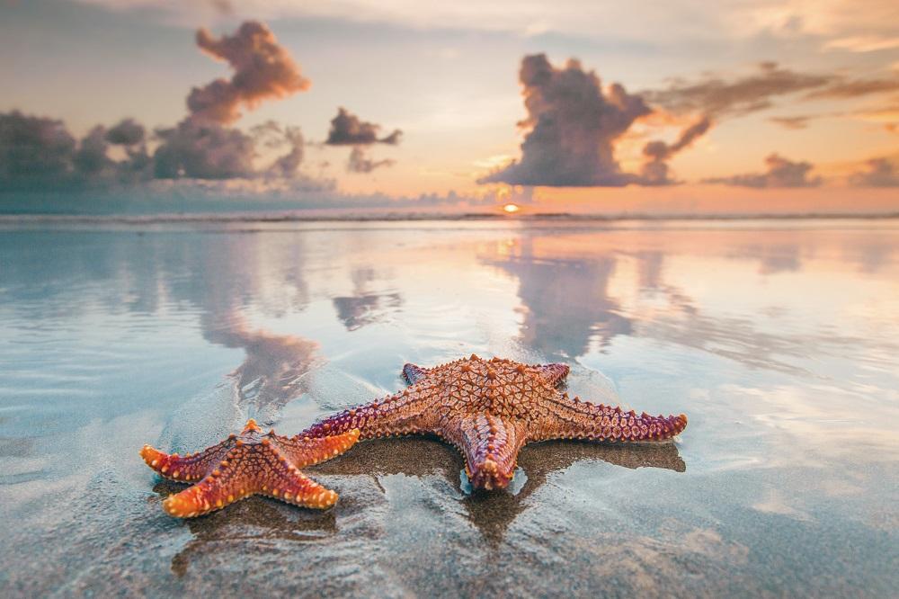 8800 Koleksi Gambar Binatang Bintang Laut Gratis Terbaik