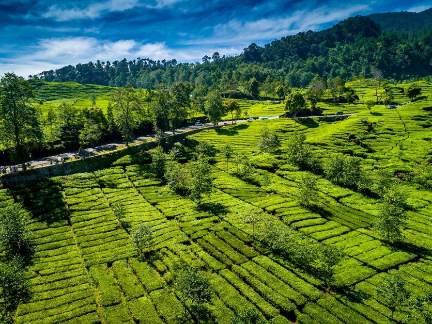 Gambar Kebun Teh Di Ciwidey Kebun Teh Walini Wisata Alam Anti Stress Di Ciwidey Bandung
