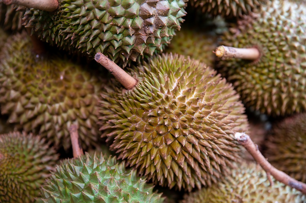 Unduh 90 Gambar Durian Utuh Terbaru Gratis HD