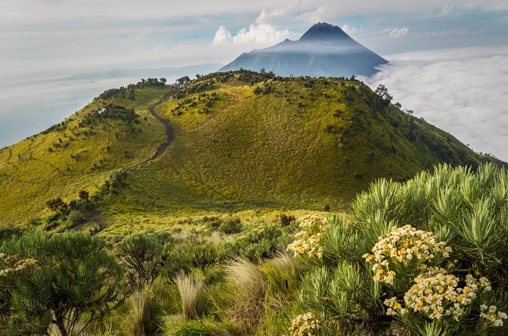 6 Gunung Dengan Taman Bunga Edelweis Yang Cantik Di Indonesia