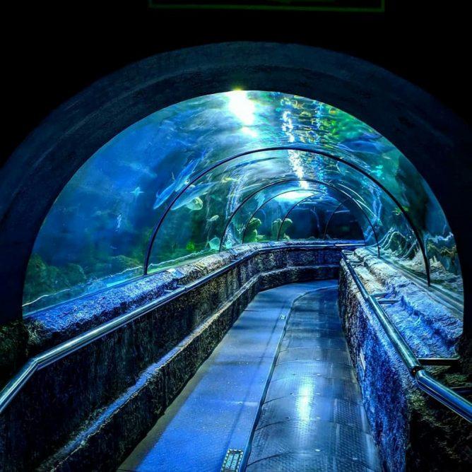 8 Taman Akuarium Di Indonesia Buat Liburan Seru Bareng Anak
