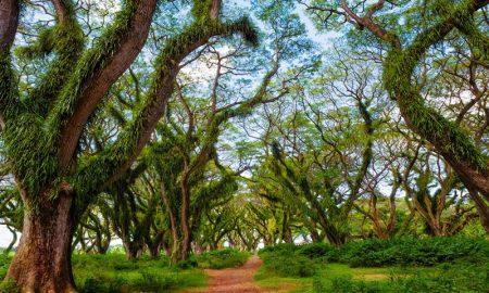 hutan instagenic di pulau jawa